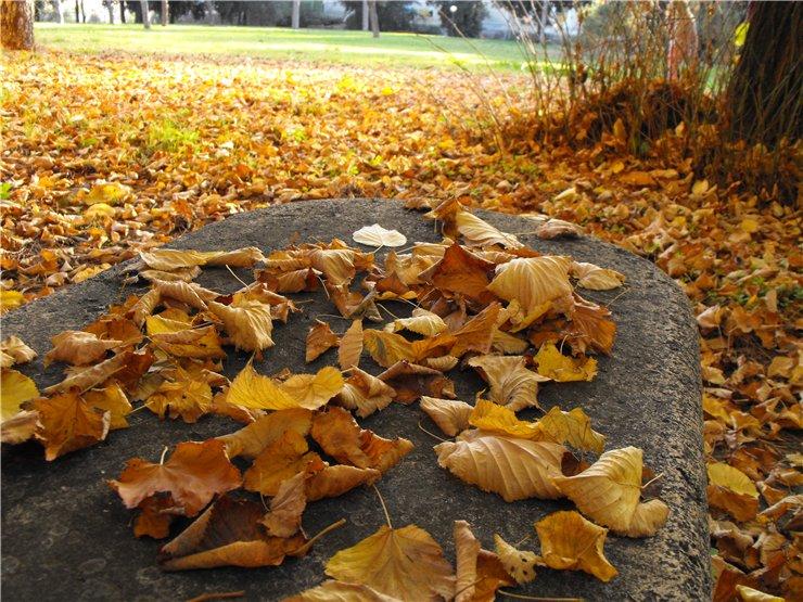 Шуршащая осень