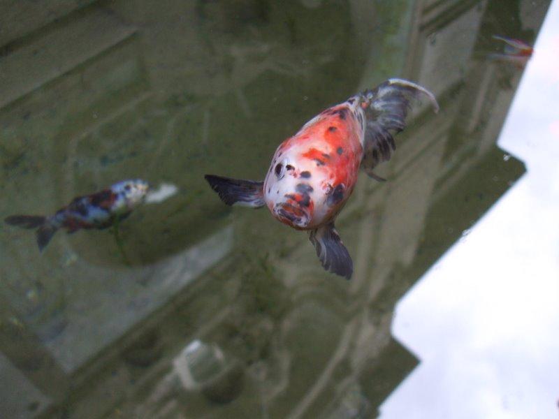 Приплыла золотая рыбка и спросила...