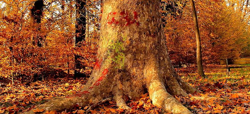 Поздняя миланская осень