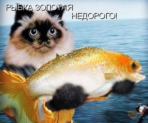Рыбка. Золотая.