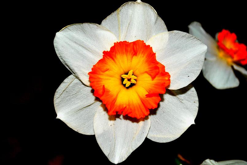 Цветок...