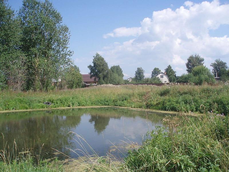 Вот моя деревня, вот мой пруд родной, или Немного детских воспоминаний:-)