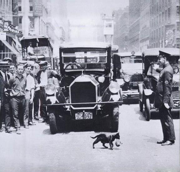 Движение приостановлено из-за кошки, переносящей котёнка через дорогу.