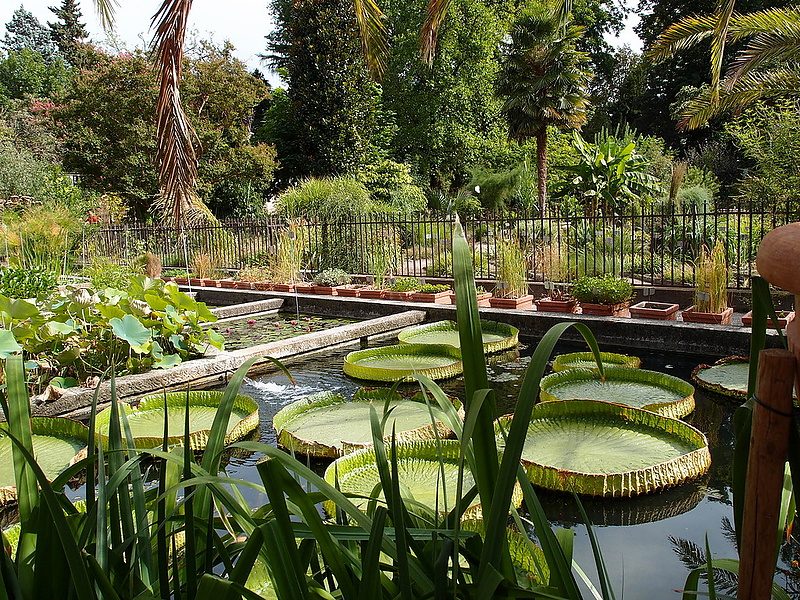 Orto Botanico -Padova-