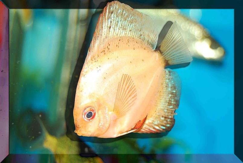 И снова Риба