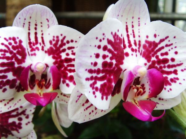 ~Bahan~в парке орхидей 3