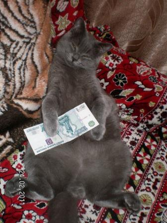 Любимый котик. Приносит деньги ;))