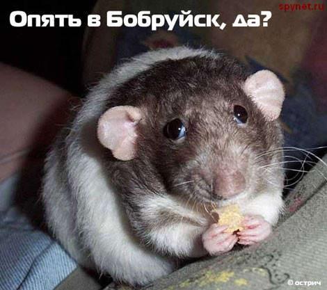 Мыша...