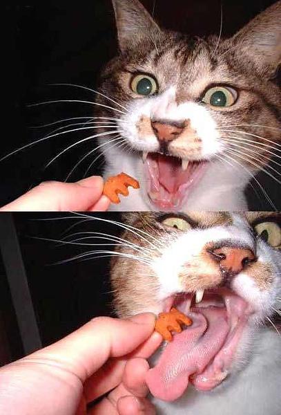 реклама Кити Кэт...
