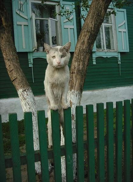 Охранный кот