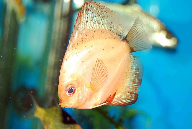 рыбка не золотая...