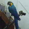 В магазине с семенами и клетками для птиц живой большой попугай.
