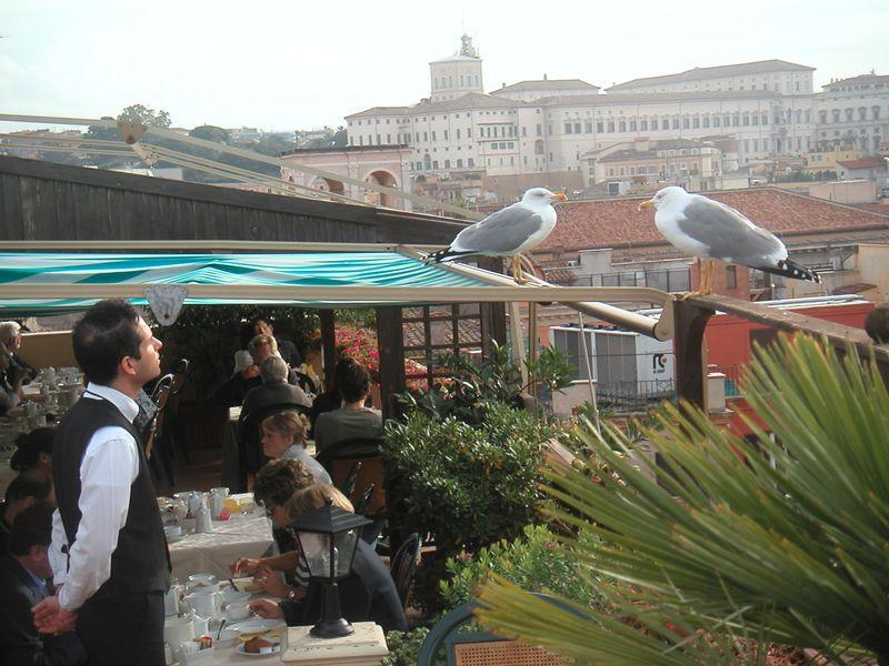 Римские чайки и завтрак:-)