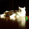Белый тигр .... (мини)