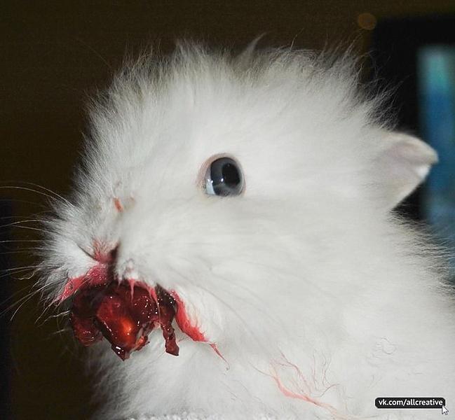 Кровожадный кролик