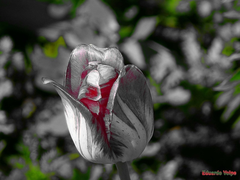 Прелестный цветочек