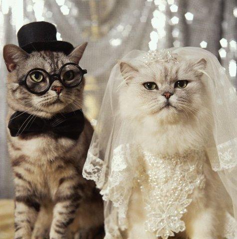 Тили-тили тесто, жених и невеста