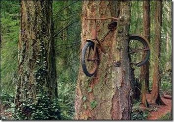 Дерево съело велосипед
