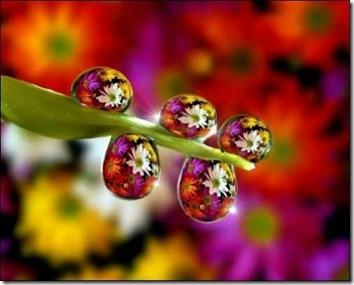 Цветочная красота