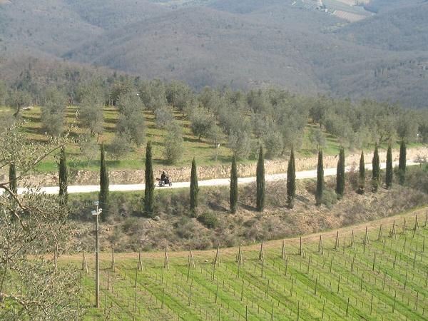 http://www.italia-ru.it/files/olive3_0.jpg