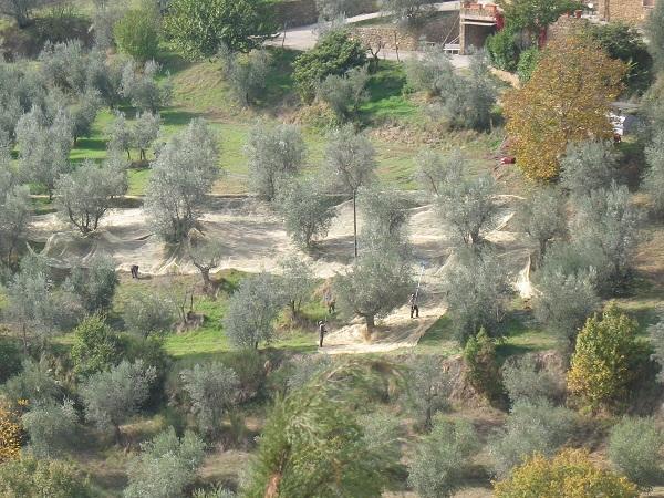 http://www.italia-ru.it/files/olive4_0.jpg