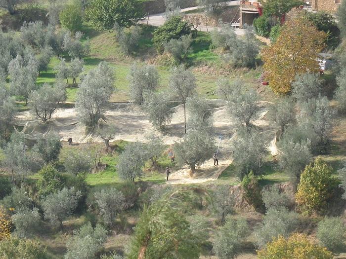 http://italia-ru.com/files/olivone_1.jpg