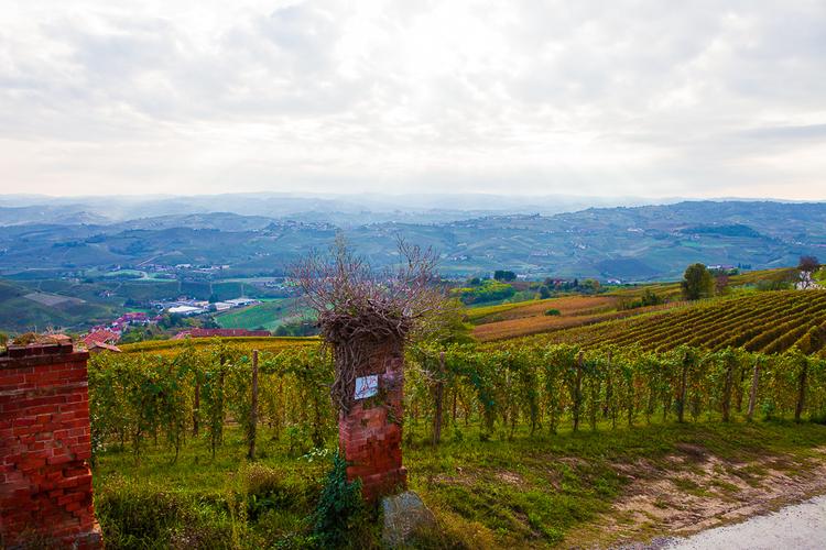 Винограднки вокруг Ла Морра, фото Антон Гросс