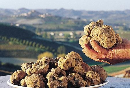 http://www.italia-ru.it/files/tartufo-bianco1.jpg