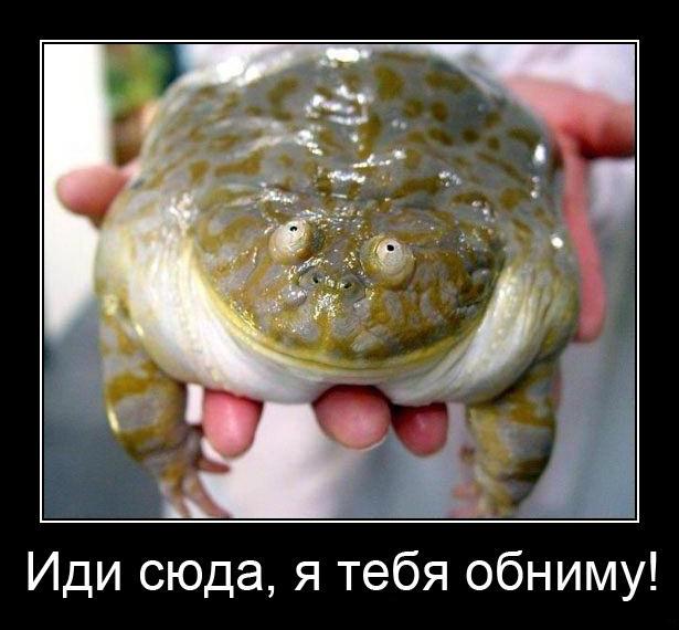 А вот эта жаба,которая душит!!! – Форум об Италии